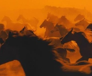 horses, orange, and wild horses image