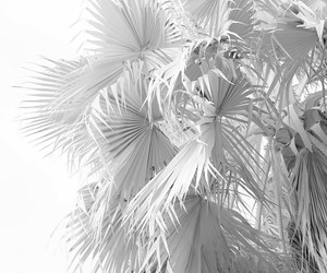 white, aesthetic, and plants image