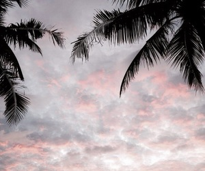 aesthetic, sky, and palm trees image