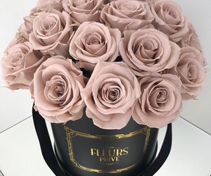pretty, chic, and rose image