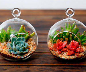 cactus, decor, and design image