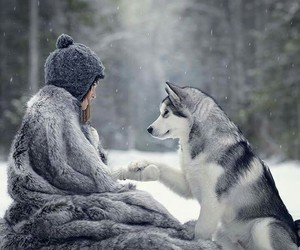 friend, wolf, and loup image