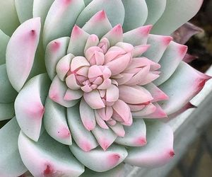 green, succulents, and Hot image