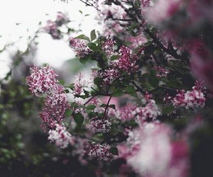 flowers, japan, and nothing image