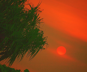 apocalypse, nature, and red image
