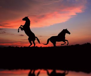 horse, sunset, and animal image