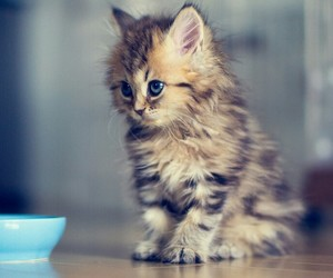 animals, pets, and blue eyes image