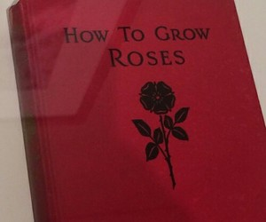 red, rose, and book image