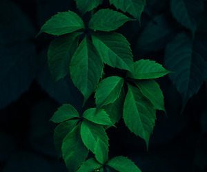 green and nature image