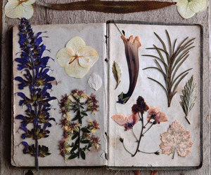 book, floral, and flowers image