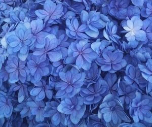 flowers, blue, and forget-me-not image