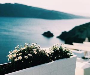 flowers, Greece, and Island image