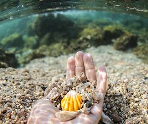 sea, water, and shell image