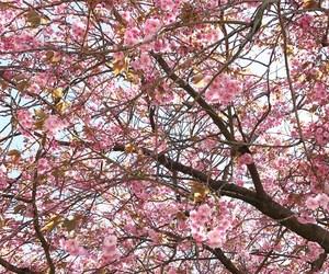 beautiful, summer, and cherry blossom tree image