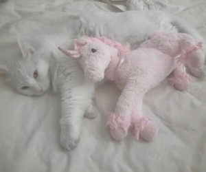 cat, unicorn, and pink image