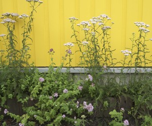 flowers, yellow, and yellow wall image