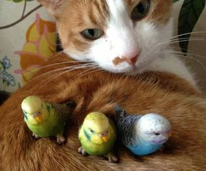 animals, cat, and pets image