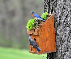 birdhouse, garden, and rustic image