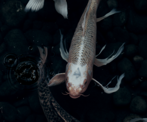 fish, dark, and theme image