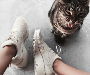 animal, cat, and fashion image
