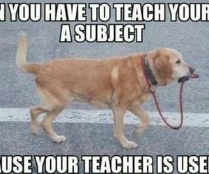 dog, quotes, and teacher image