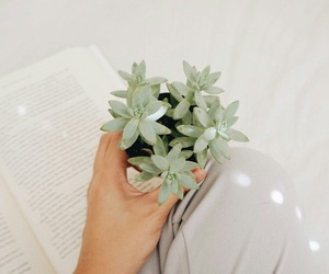 aesthetic, hand, and plant image