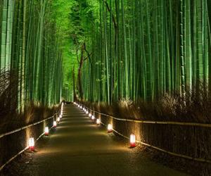kyoto, japón, and bosque de bambú image