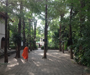 monk, quotes, and thailand image