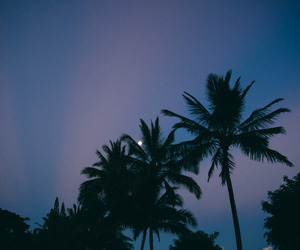 indie, moon, and palm trees image