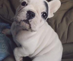 dog, Lola, and cute image
