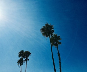 blue sky, california, and palm tree image