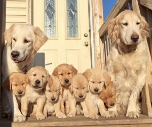adorable, pet, and dog image
