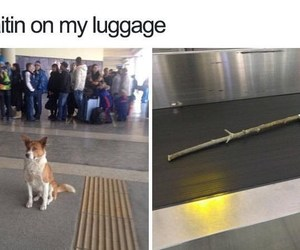 airlines, dog, and funny image
