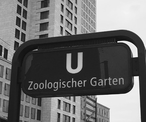 berlin, f, and zoo image