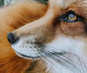 animal, portrait, and beautiful image