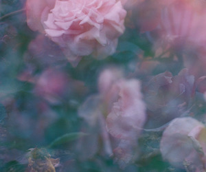 aesthetic, Film Photography, and roses image