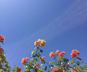 flowers, sky, and blue image