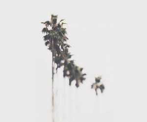 etsy, palm trees, and photography image