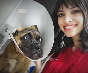 brasil, dog, and cute image