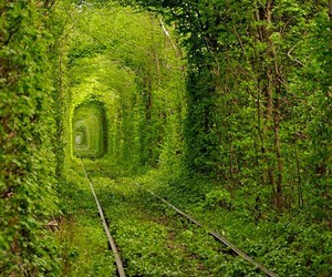 green, nature, and ukraine image