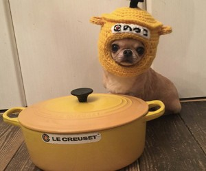 dogs, yellow, and cute image