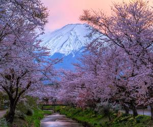 japan, mountain, and sakura image