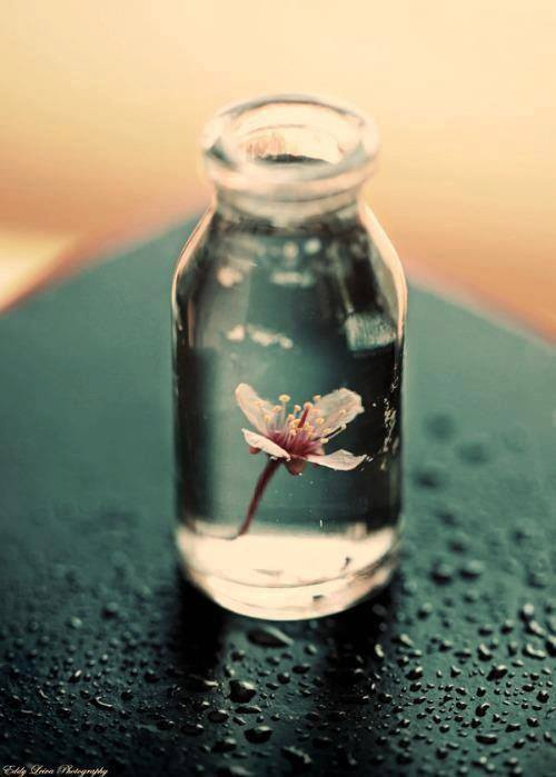 flowers, photography, and water image