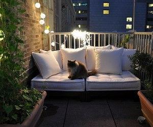 balcony, cat, and light image