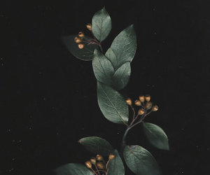 dark and green image