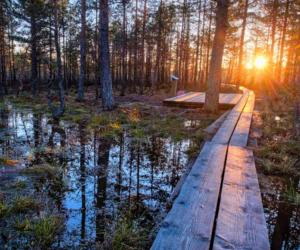 atardecer, luz, and bosque image