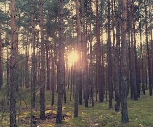 Sunny, słońce, and krajobraz image
