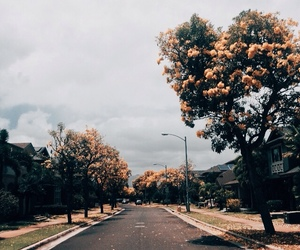 nature, tree, and street image