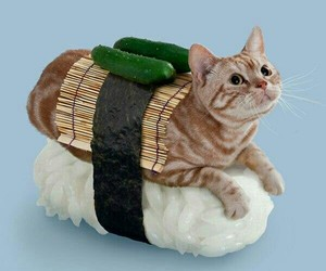 cat, sushi, and funny image