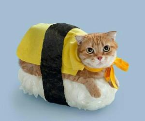 animal, photo, and cat image